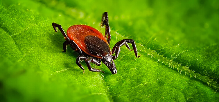 Chronic Lyme Disease and Stealth Microbial Invaders